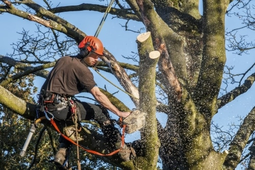 HOW TO TAKE THE TREES WITHOUT HARMING THE REST AND LOGGING WITH MINIMAL IMPACT